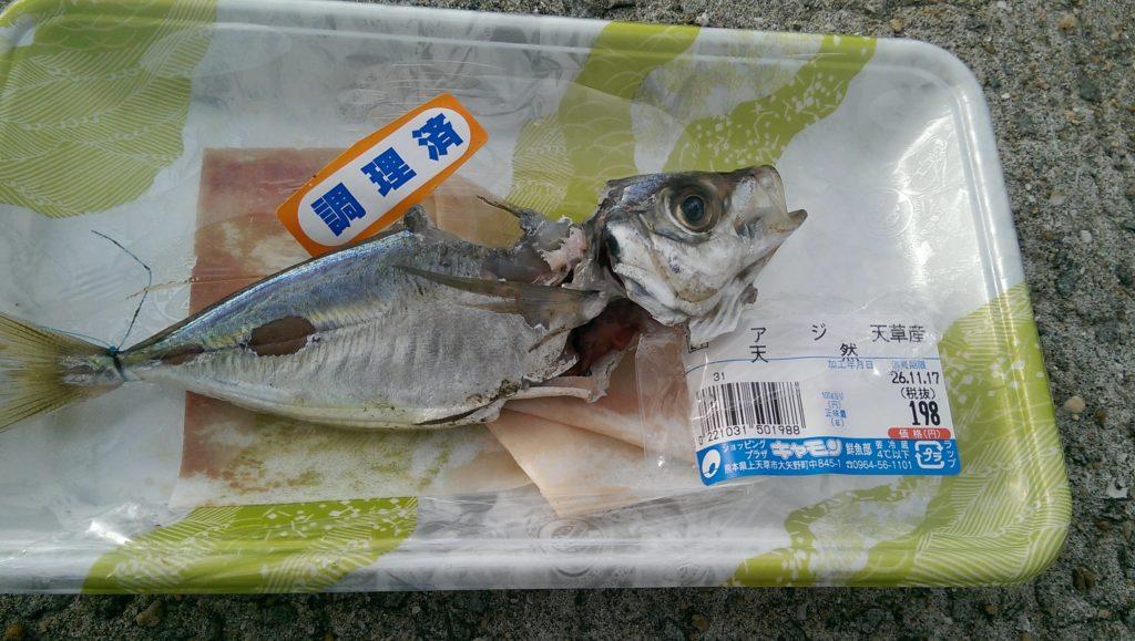 イカじゃない何かに食べられたアジ・・・